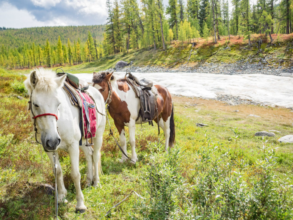 How To Go Horse Trekking In Mongolia: A Beginner's Guide To Traveling Mongolia On Horseback