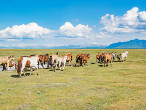 The Backpacker's Guide To Independent, Budget Travel In Mongolia