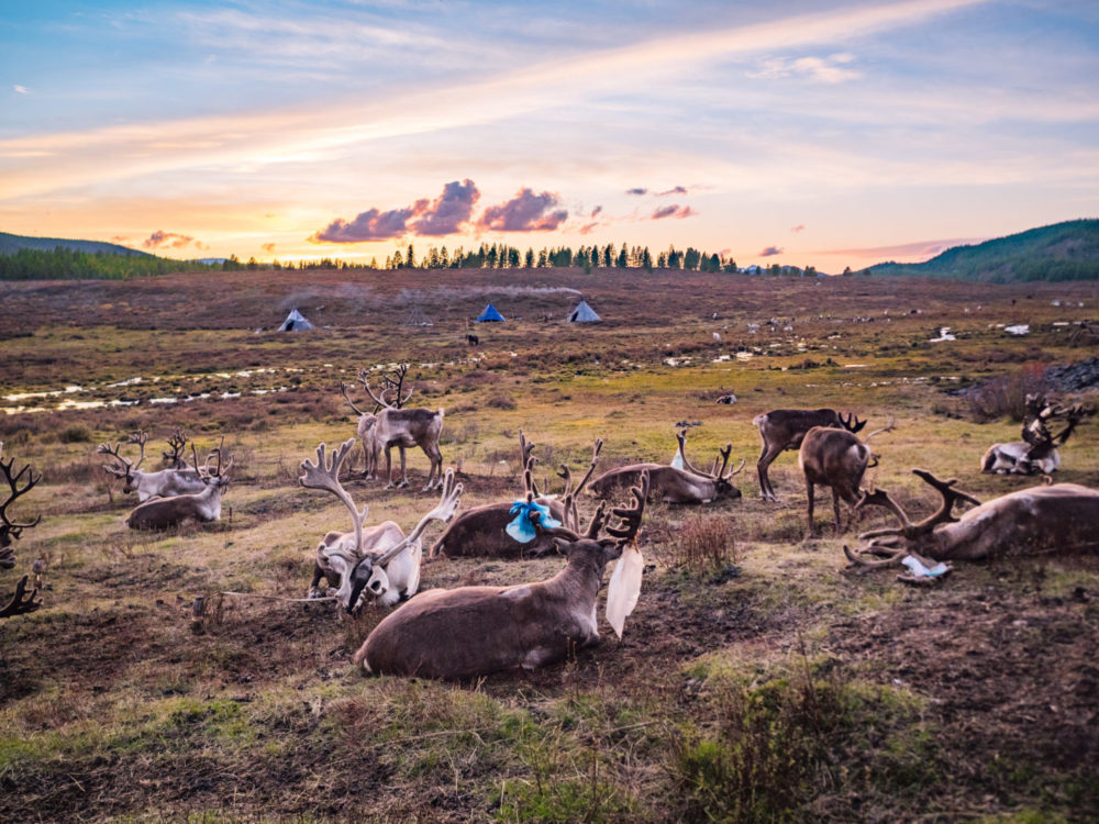 A Day In The Life of Mongolia's Tsaatan Reindeer Herders: 20+ Tsaatan Reindeer Photos That Will Make You Want To Visit Mongolia